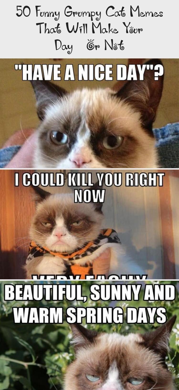 50 Lustige Murrische Katze Meme Die Ihren Tag Machen Oder Nicht