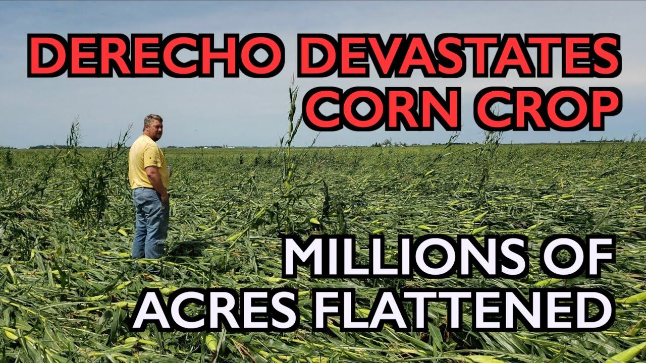 DERECHO Corn Crop Catastrophe, Grain Stores Destroyed
