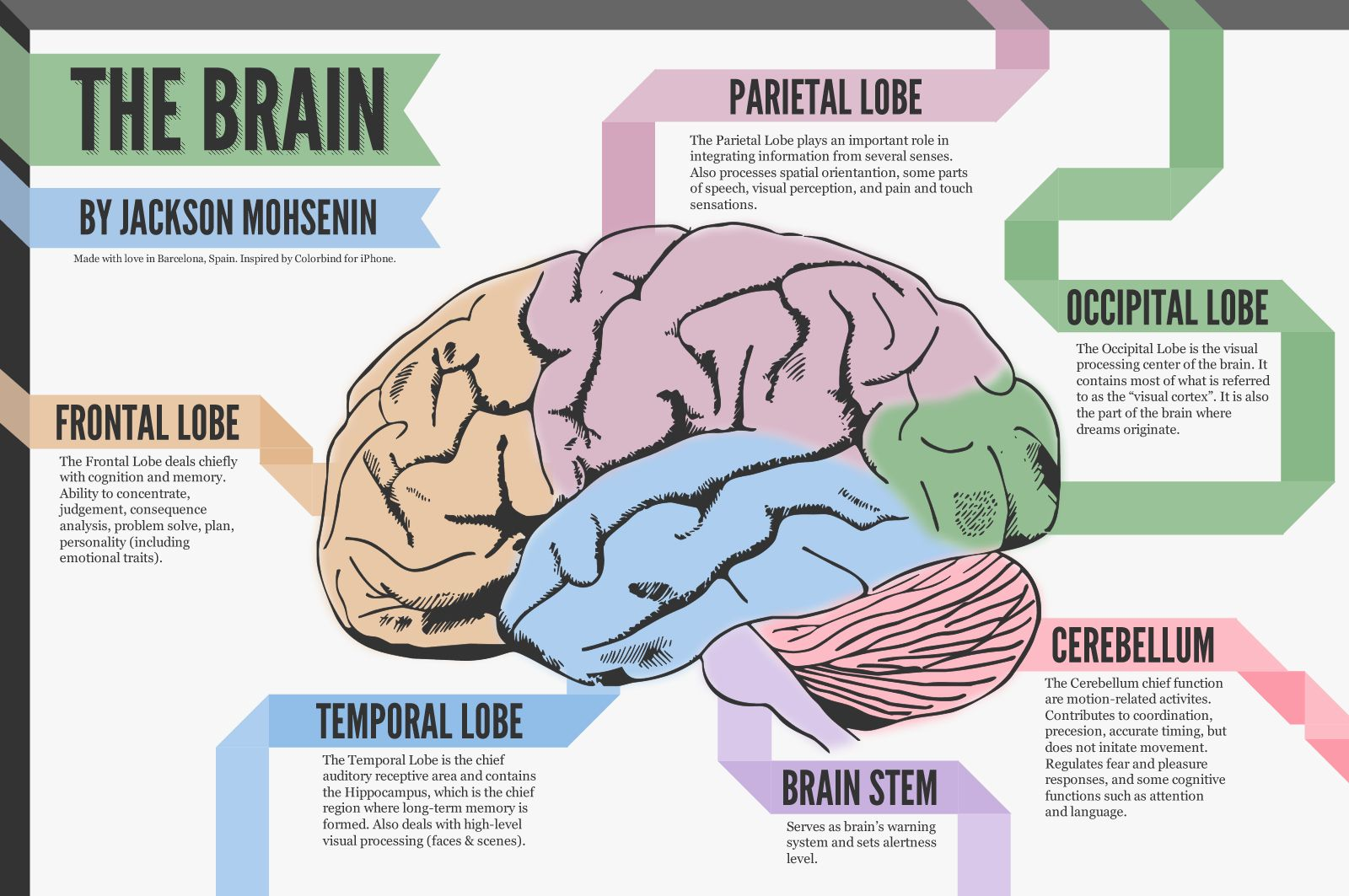 The Human Brain Diagram And Functions (With images ...