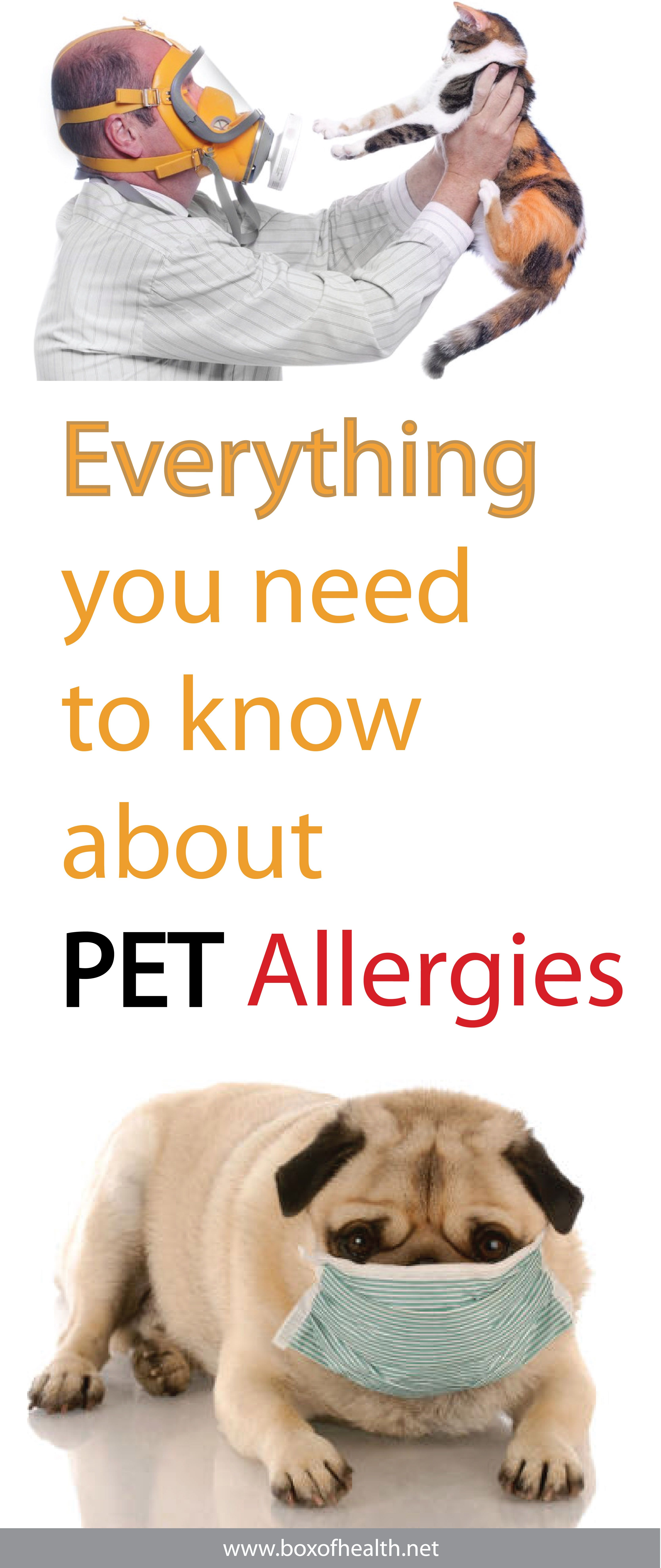 Everything You Need To Know About Pet Allergies Pet