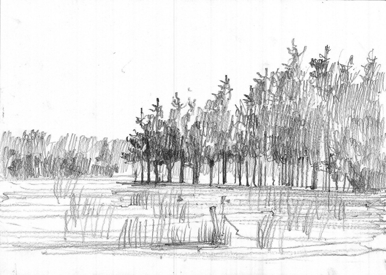 New Forest Sketch. by Krystian0Wozniak.deviantart.com on ...