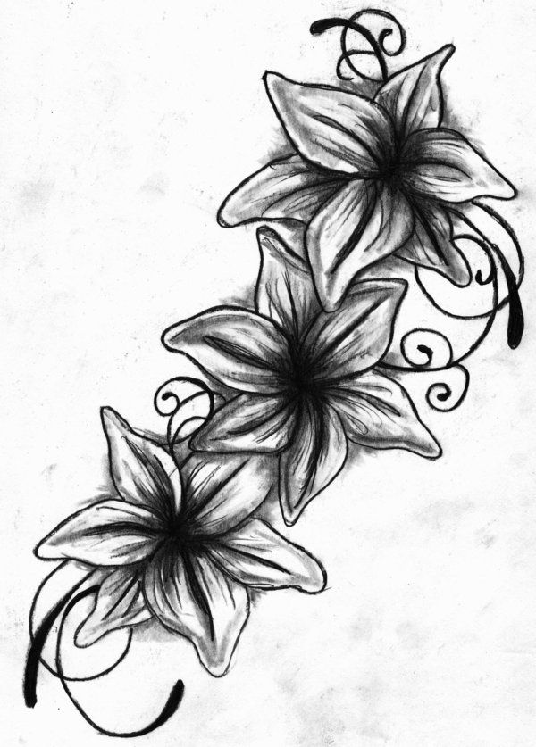 Lily Tattoo Line Drawing : Tattoo drawings lily drawing black and white by