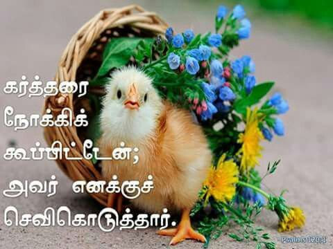 Pin On Tamil Bible Words