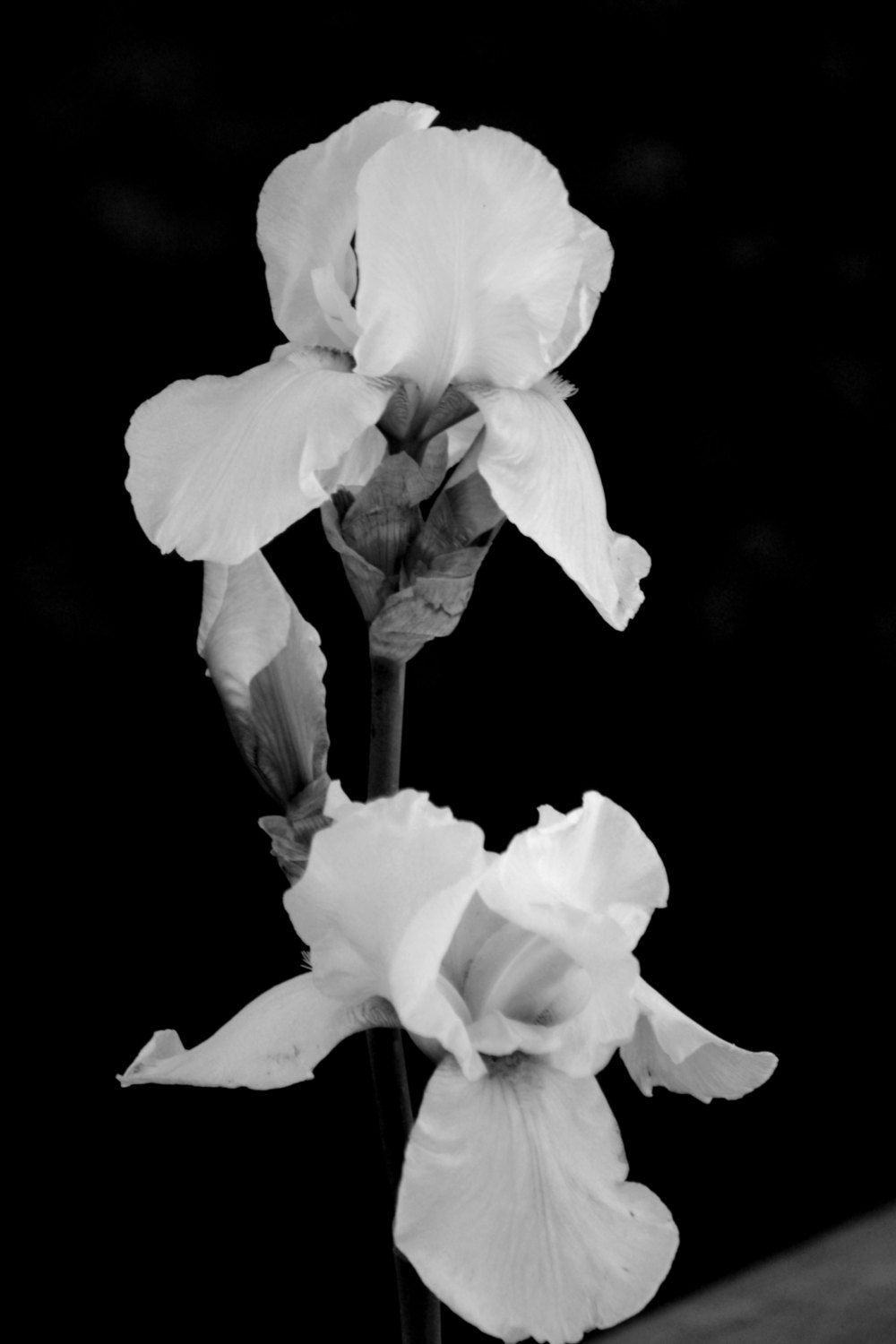 Black And White Art Photography Iris Flower Home Decor Wall Etsy White Flower Photos White Art Iris Flowers