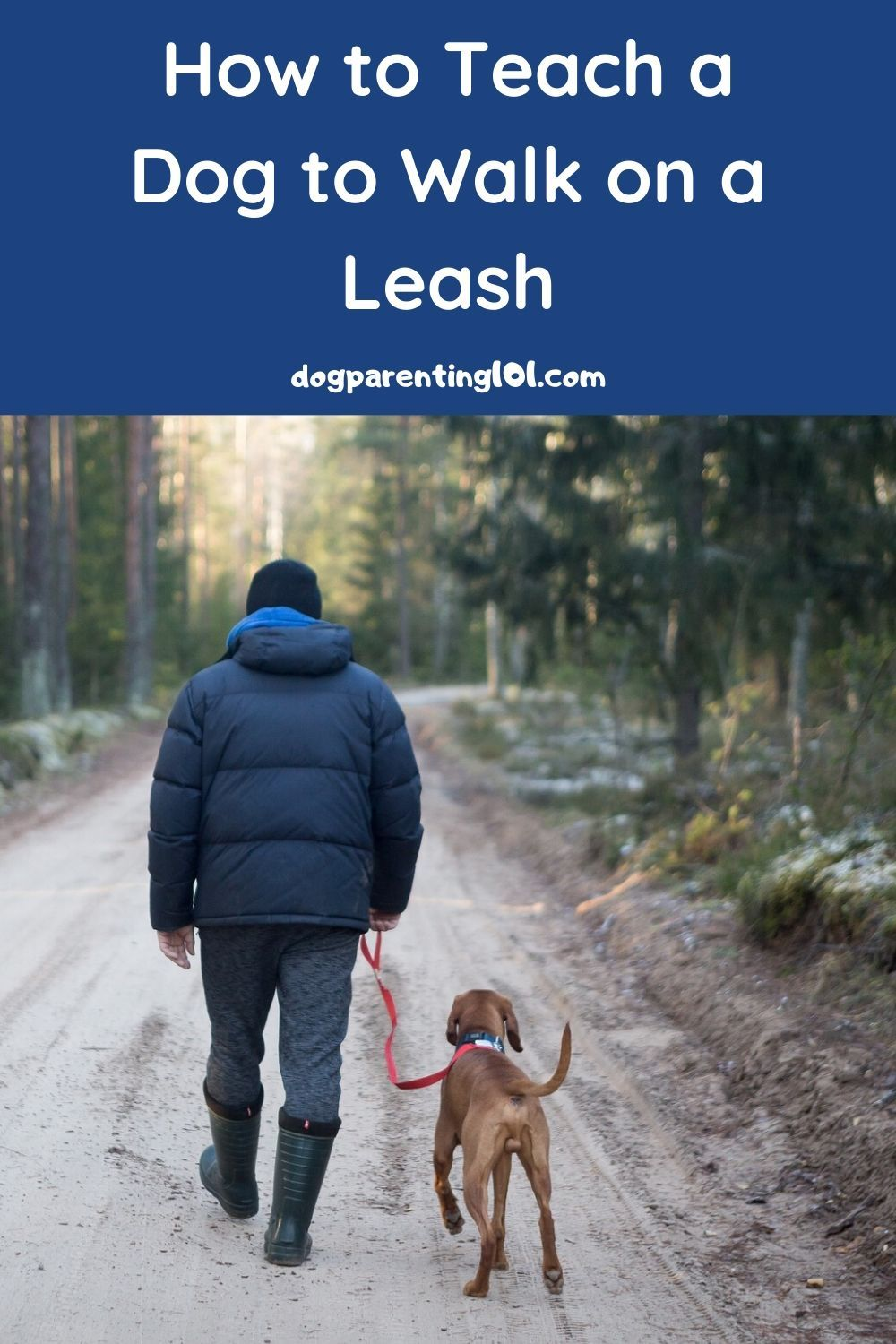 How to train a rescue dog to walk on a leash dog