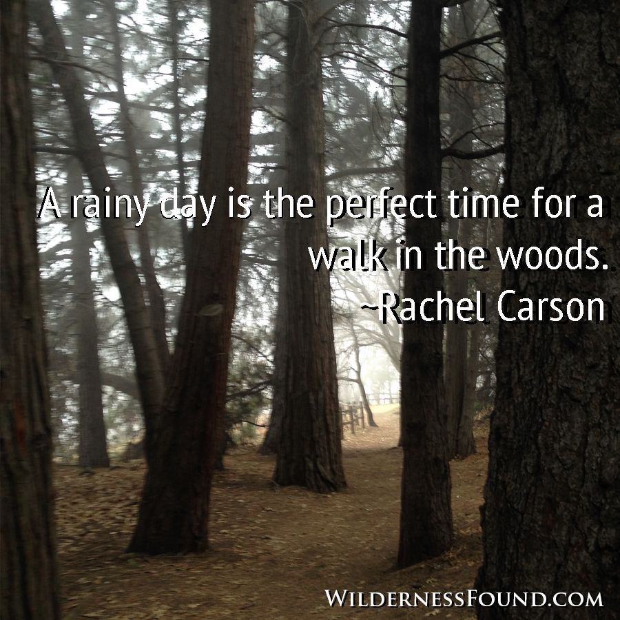 a rainy day is the perfect time for a walk in the woods rachel   a rainy day is the perfect time for a walk in the woods rachel carson