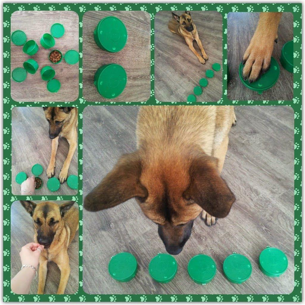 Hund Bild Von Michi Muller Hunde Spielzeug Diy Hunde Spiele Hunde