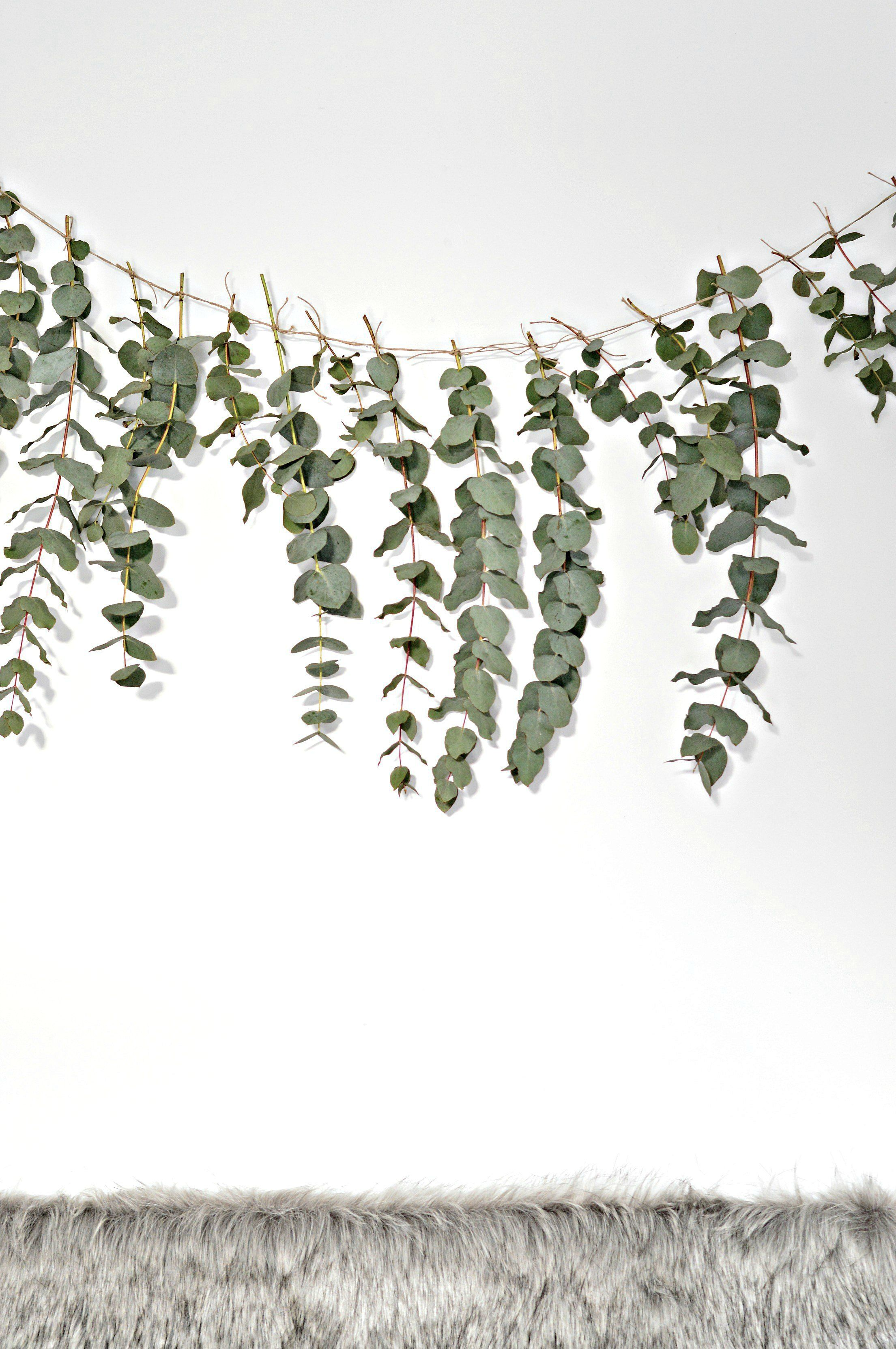 Natural Eucalyptus Leaves for Flower Arrangement Wedding Home Decor Dried Real Eucalyptus Branches 12 Stems
