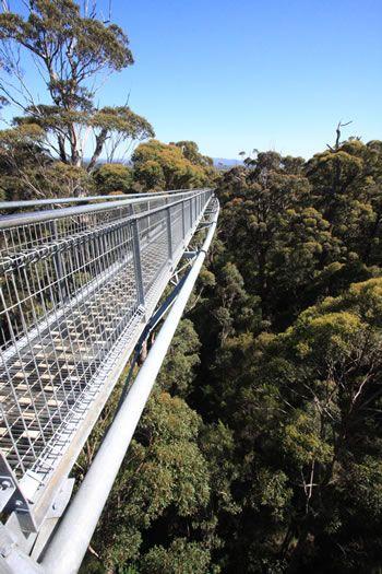 Tree Top Walk (600/40m), Valley of the Giants, Denmark, Western Australia (south)
