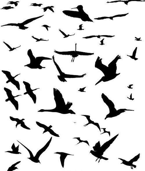 Flying Bird Flying Bird Silhouette Bird Silhouette Bird Outline