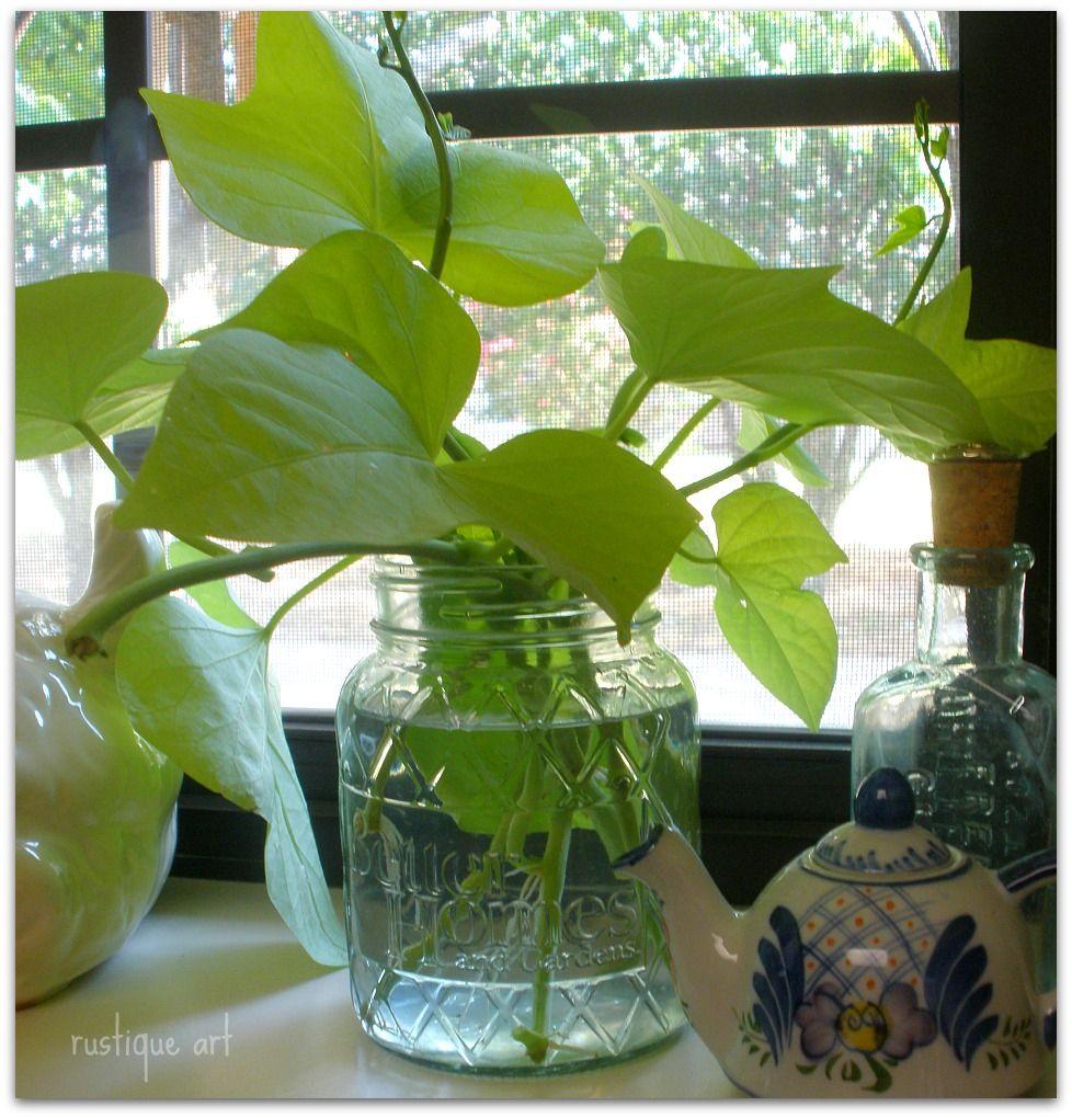 Making More Of A Good Thing Indoor Water Garden Indoor Plants