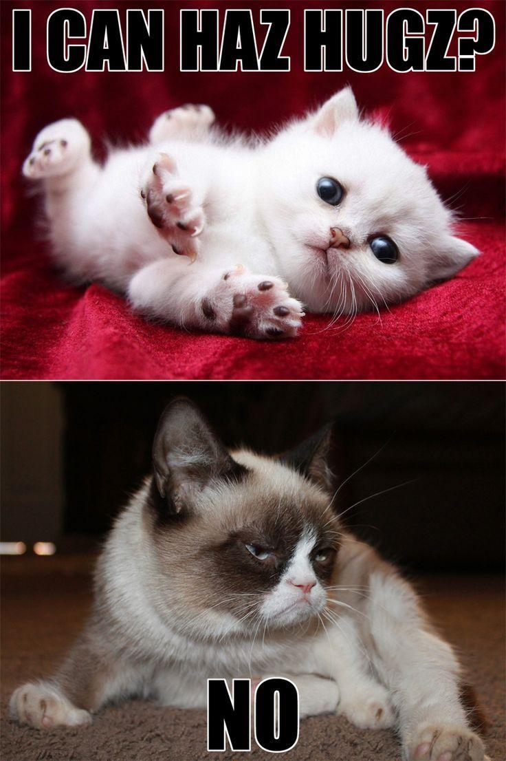 The 25+ best No grumpy cat ideas on Pinterest   Grumpy cat ...