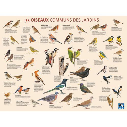 Poster 35 oiseaux communs des jardins th me oiseaux for Oiseaux des jardins