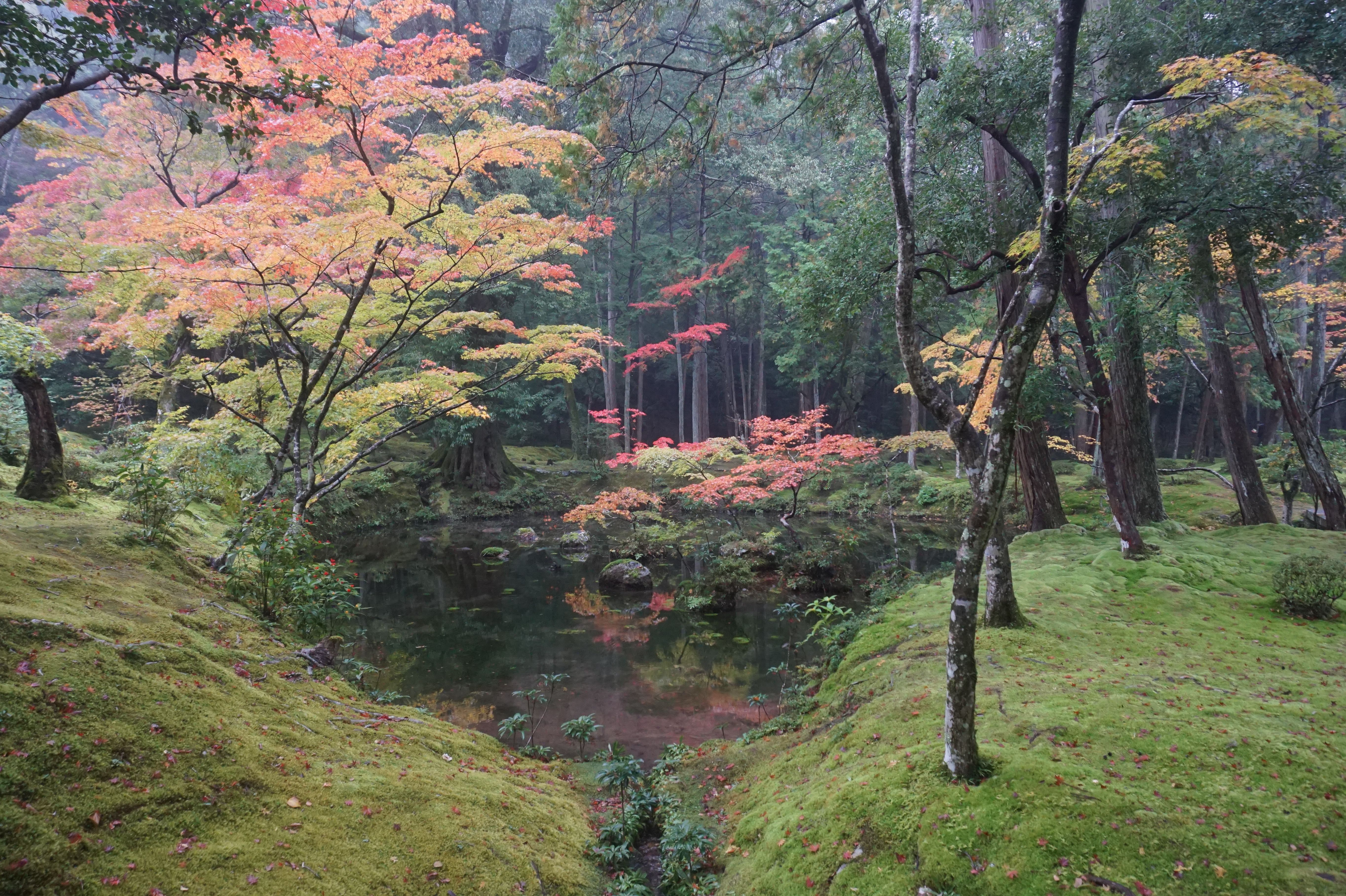 How To Get A Permit To Visit Kyoto Saihoji Kokedera Moss Temple