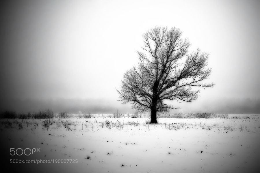 RT: #photography #blackandwhite #photos #photo : Lonely by marinasurniene https://t.co/8gwLuvzOsg via SoleClick #followme #photography