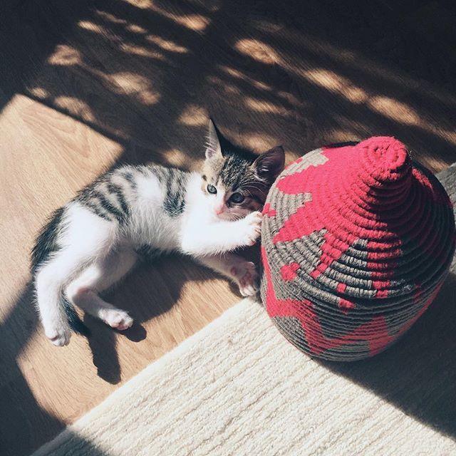 Dernier petit câlin avant l'envoi de notre corbeille Filfila  #cuteness #berberbasket #basket #berber #berbere #corbeille #beniouarain #cat #colorful #handmade #decoration #morocco #marrakech #beldy #beldyparis