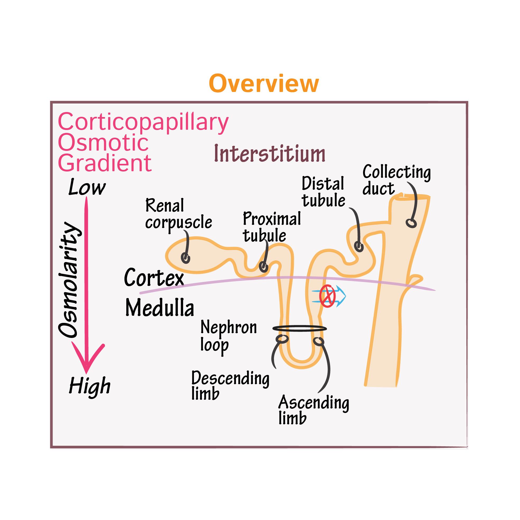 Physiology Tutorials