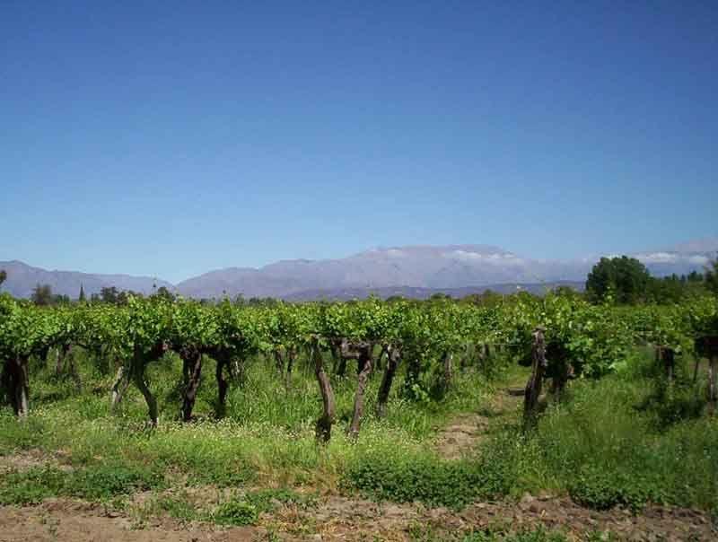 Chilecito y los Valles del Famatina  son una amplia región turística y productiva en la provincia deLa Rioja, con grandes viñedos -el cultivo principal- además de olivos, nogales y diferentes variedades de frutales.