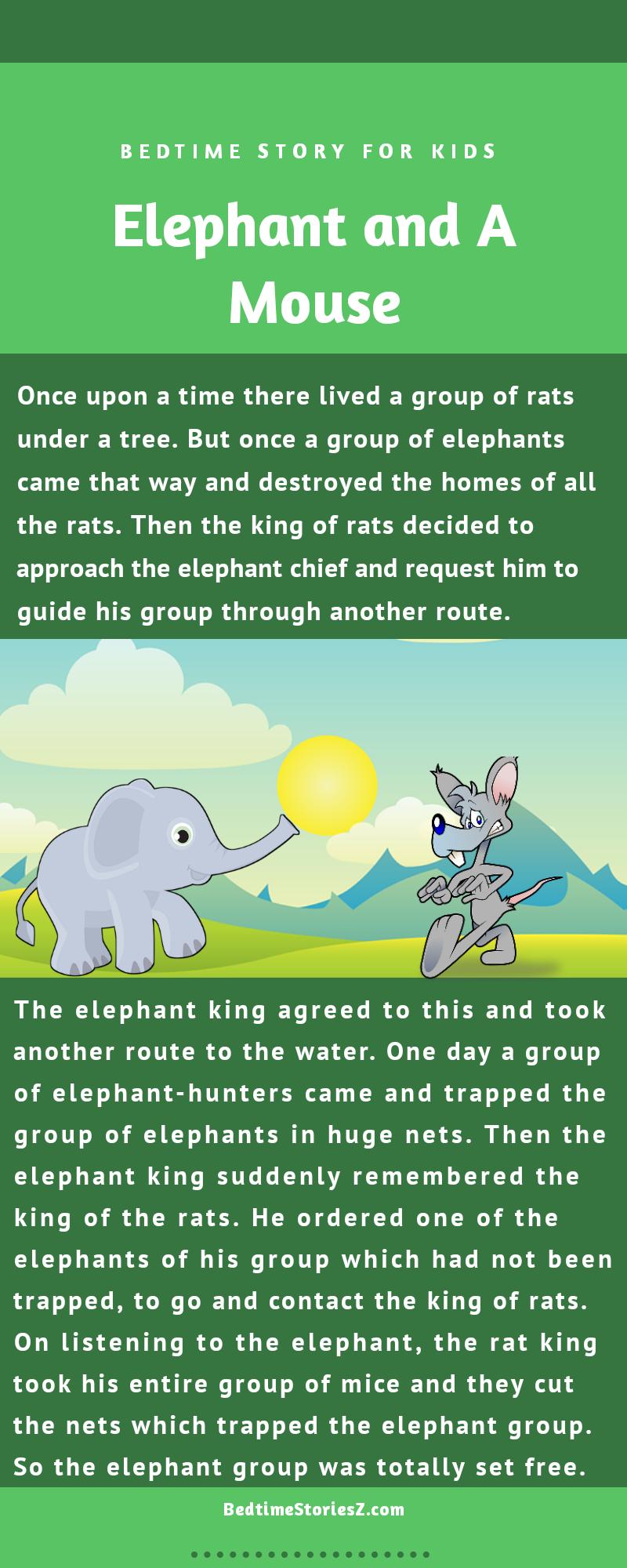 elephant and rat