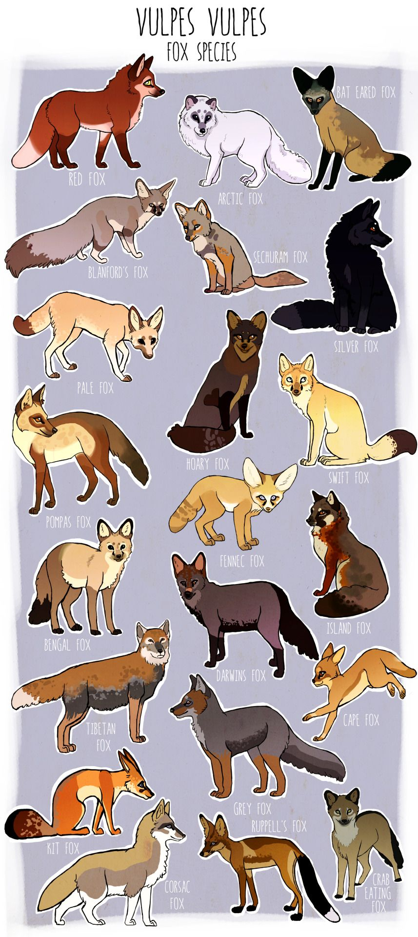 Please Browse The Tag Lists Fox Art Animal Drawings Cute Drawings