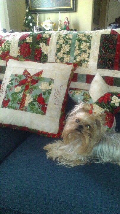 Roxy with Christmas quilt.