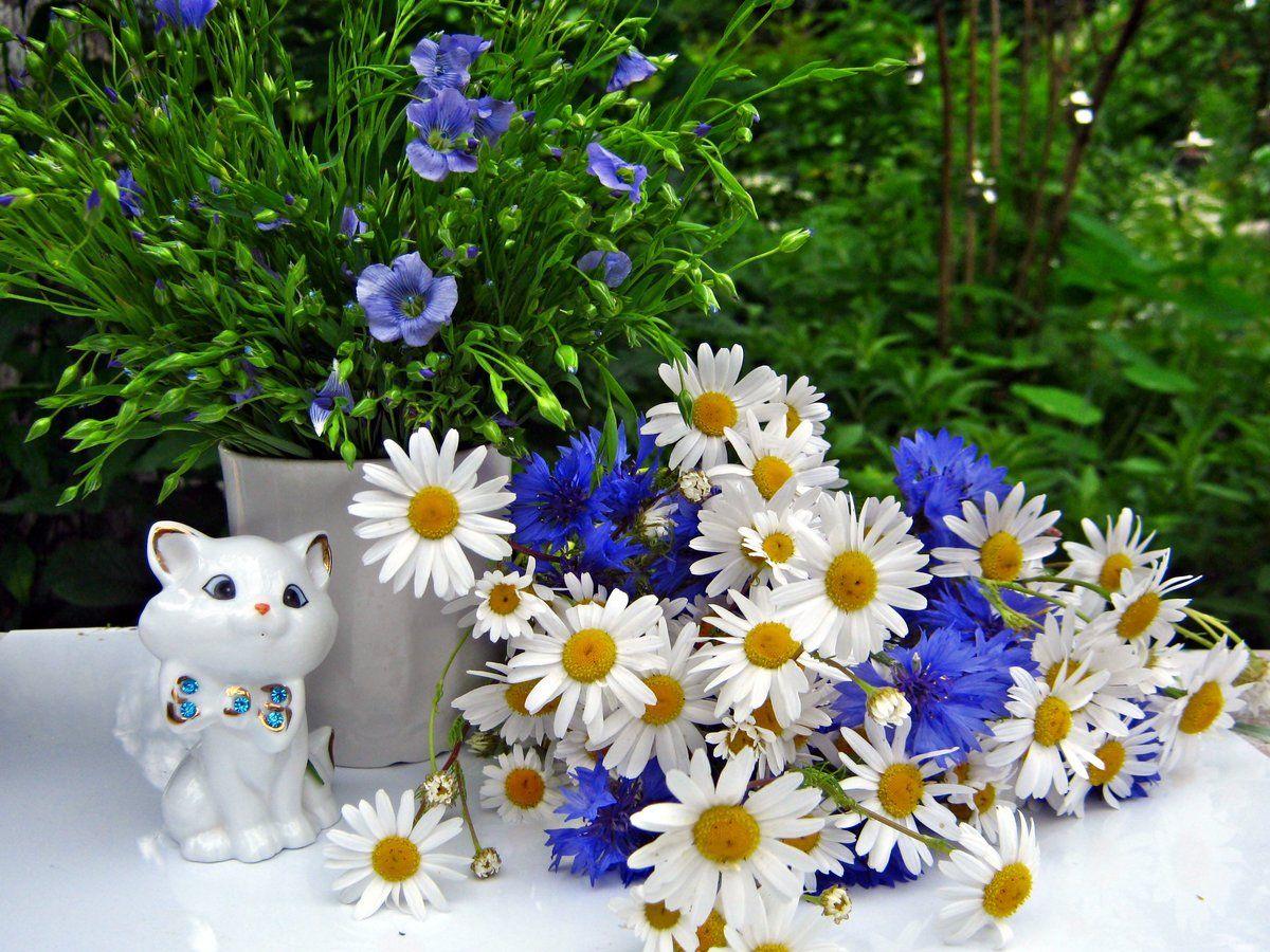 Картинки днем, картинки цветы васильки с ромашками