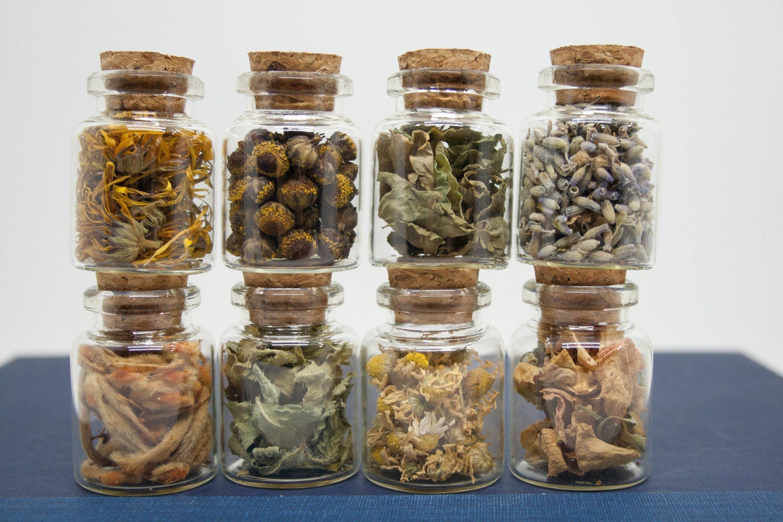Herb Samples in Glass Vials Set of 8 Herbalist