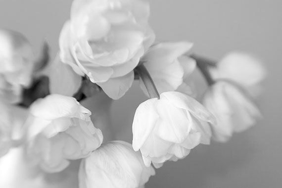 Black And White Photography Tulip Print Still Life Photography