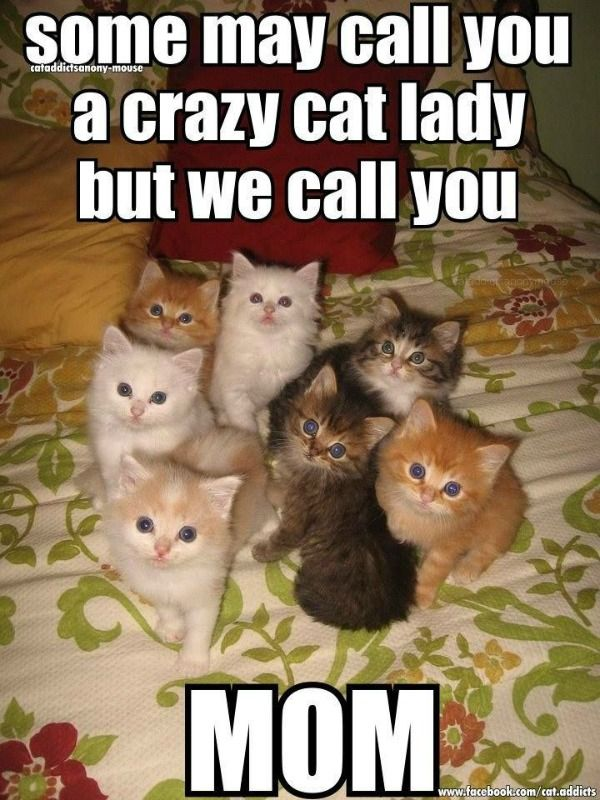 Cat Memes With Funny Sayings Is There Anything Better On The