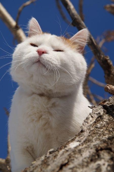 แมว おしゃれまとめの人気アイデア Pinterest Nattamon Chanamporn 可愛すぎる動物 美しい猫 クールな猫