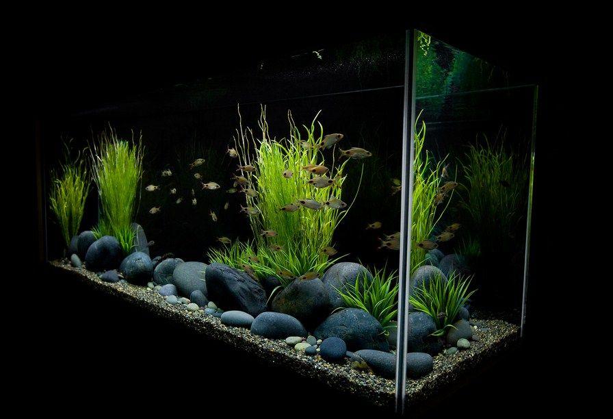 4 Reasons To Take An Aquarium For Your Child Fresh Water Fish Tank Aquarium Fish Tank Tropical Fish Tanks