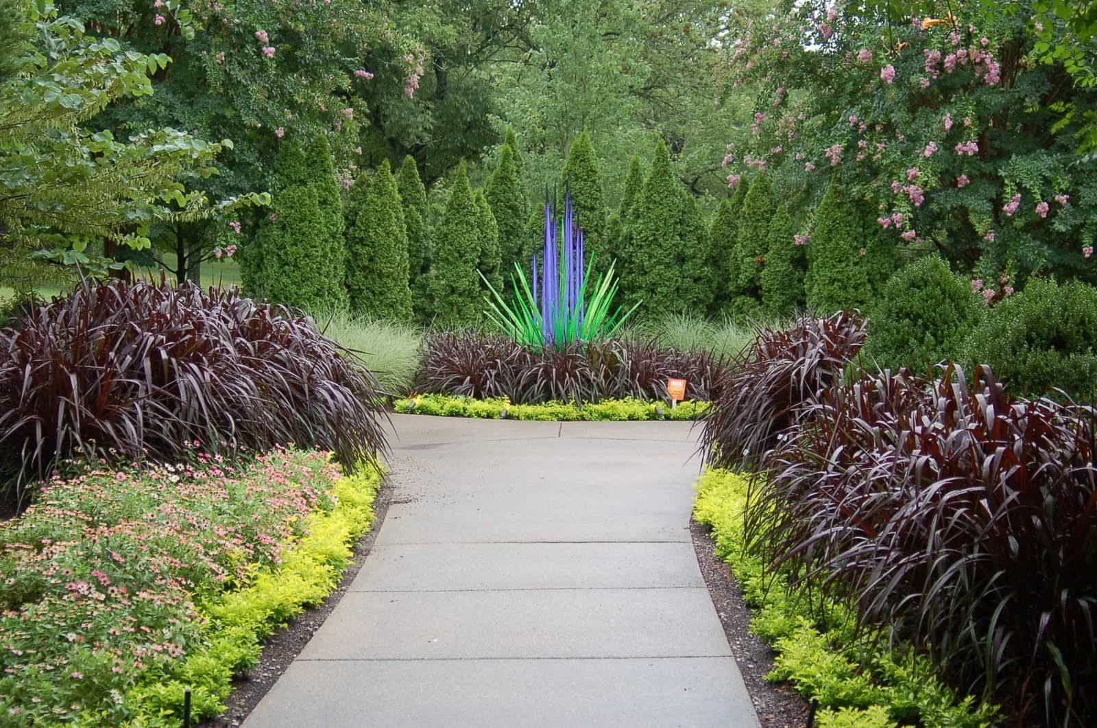 Purple Fountain Grasses For Landscaping Fountain Grass Plants