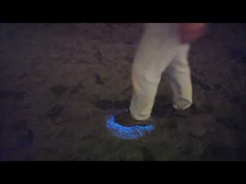 Alien footsteps on beach in san diego bioluminescence for Tides for fishing san diego