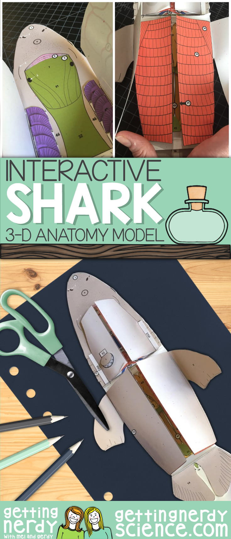 Shark Paper Dissection - Scienstructable 3D Dissection Model ...