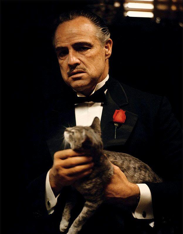 Vito S Cat Marlon Brando The Godfather The Godfather Godfather