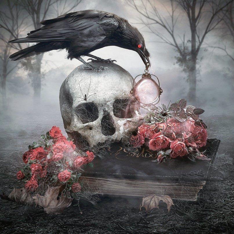 фото ворона на черепе нечасто