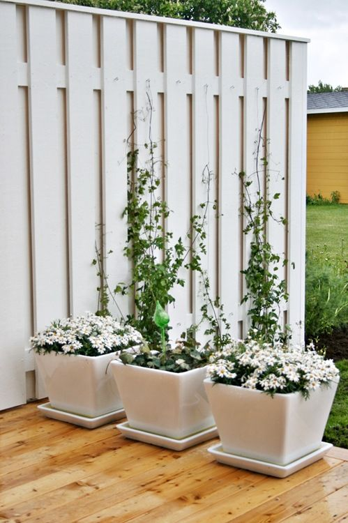 Beautiful Trellis And Gorgeous White Pots Photographed At