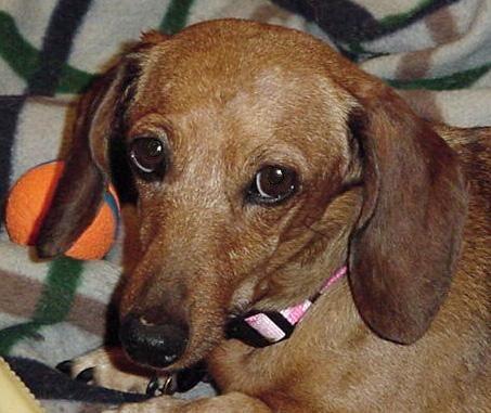 Gayweho Dogs 4 U On Dogs Weenie Dogs Dachshund