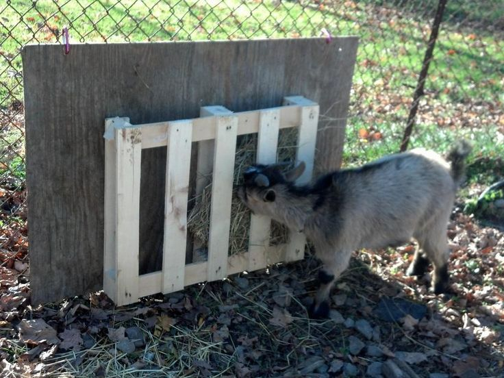 Cheap Free Hay Feeder Idea Goat Management Fur Babies