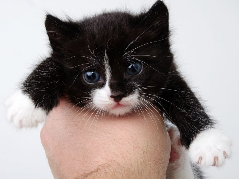 katzenbabys süße baby katzen ausmalbilder  dorothy meyer