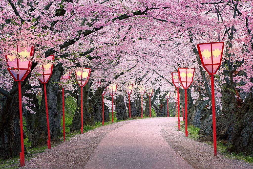 Path Into Spring Japanese Cherry Blossom Sidewalk Paint Sidewalk