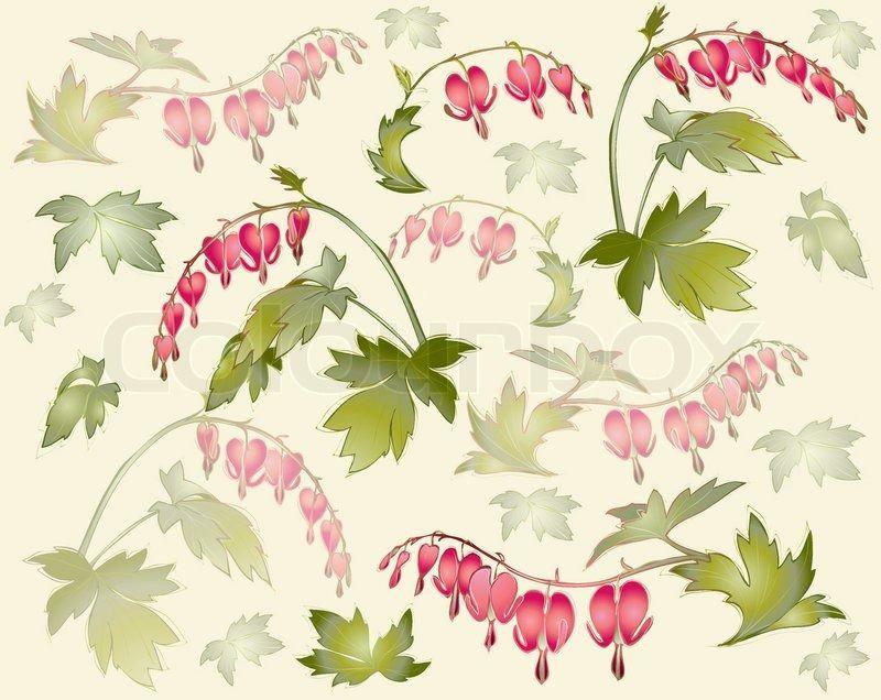 Botanical Perennial Botanical Stock Vector Bleeding Heart Flower Drawing Tutorials Botanical Illustration