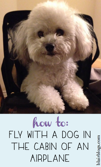How To Fly With A Dog In The Cabin Of An Airplane Blair Blogs Flying Dog Flying With Pets Dogs