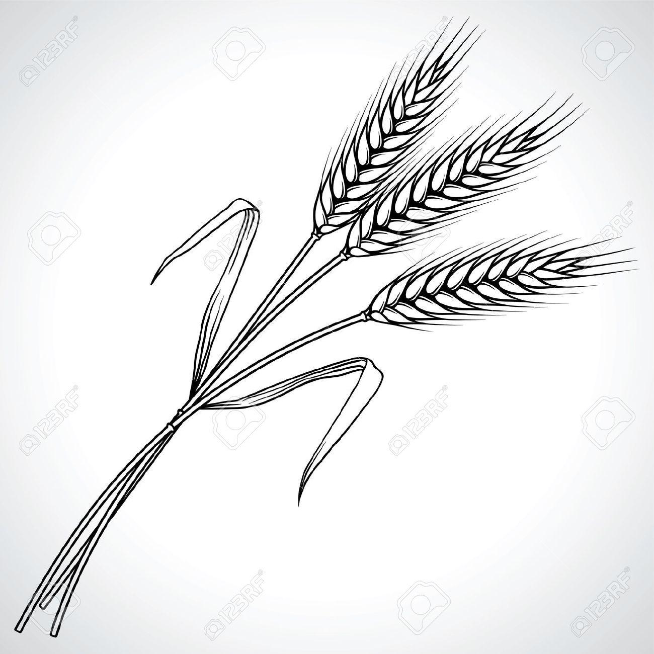 Wheat Black And White Google Search Wheat Tattoo Wheat Drawing Illustration