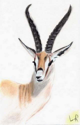 gazelle sketch   Précédent Retour à la galerie Suivant