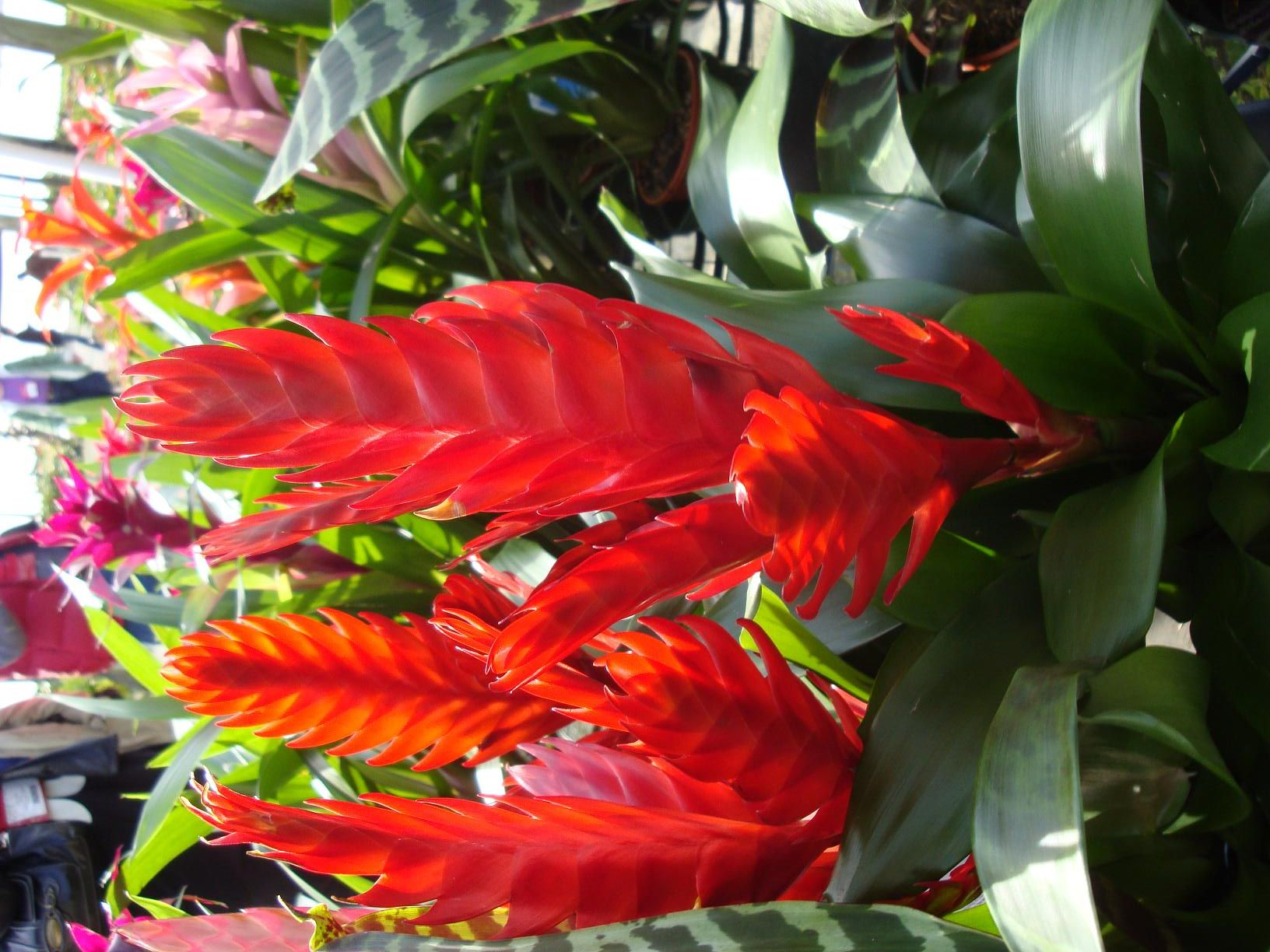 Florida Tropical Plants Names Be Sure To Visit