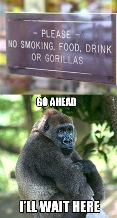 No gorillas…. | funny | Funny, Top funny, Funny animals