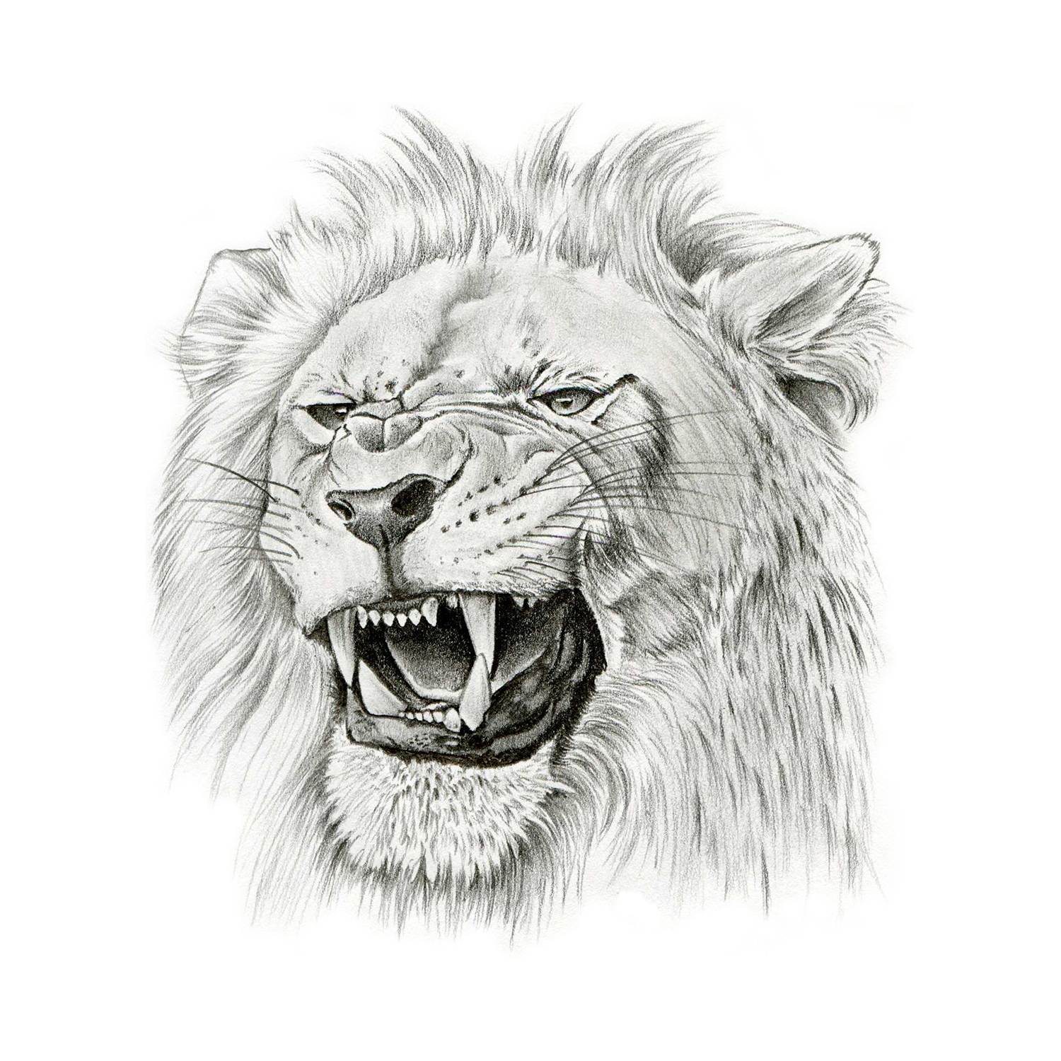 Lion Head Roaring Lion Tattoo Drawing Tattoo Design You have come to the right place! lion head roaring lion tattoo drawing