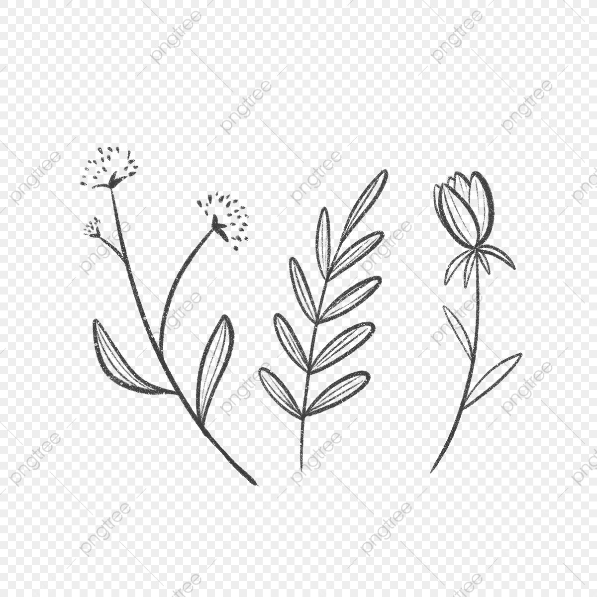 Download Hd Branch With Long Leaves Rubber Stamp Leaf Branch Drawing Png Clipart And Use The Free Clipart For Leaf Drawing Branch Drawing Fall Leaves Drawing