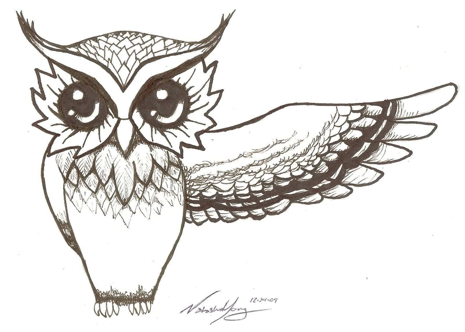 Drawings of owls owl owls bird wing drawing pictures for Draw the owl